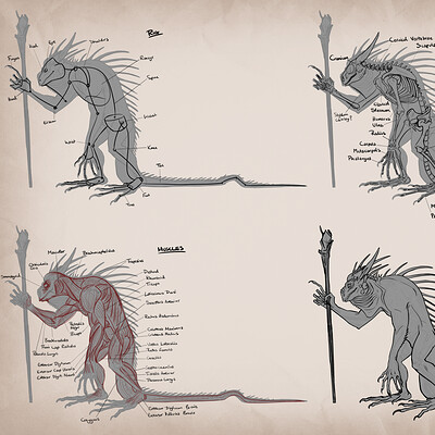 Amanda blatch amandablatch portfolio creatureanatomy lizardwizard