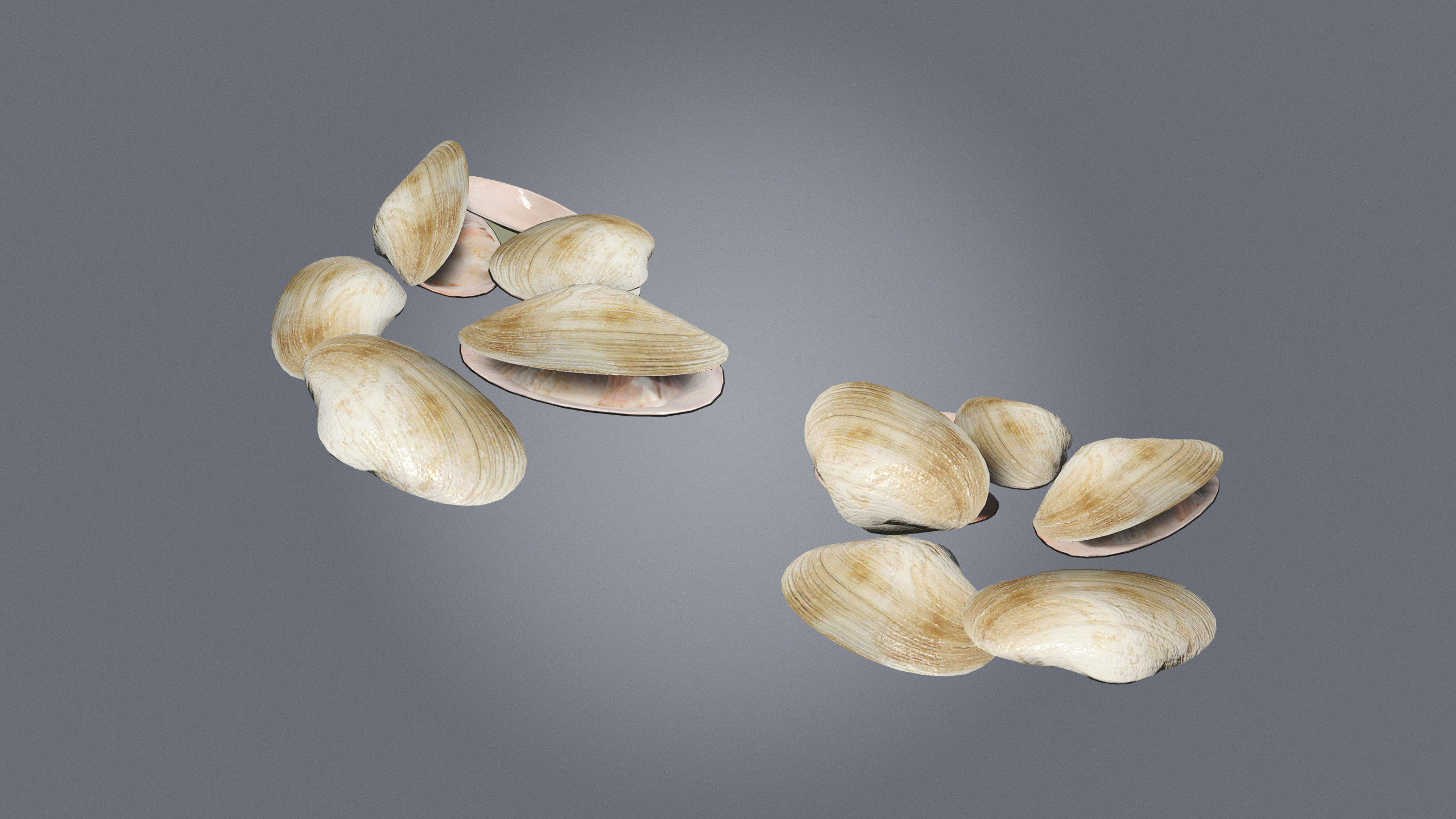 Clams, found on beaches