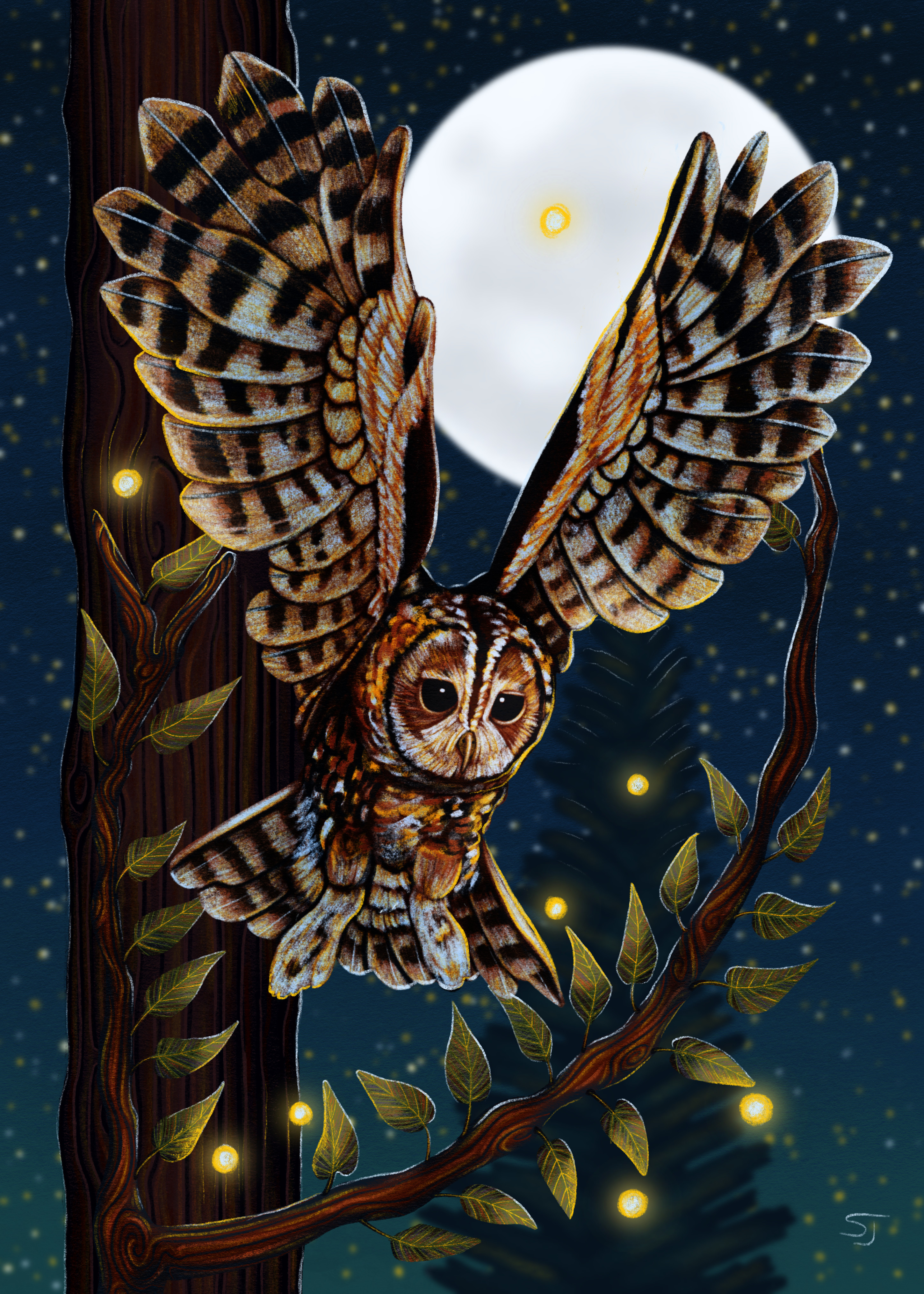 Swooping Tawny Owl