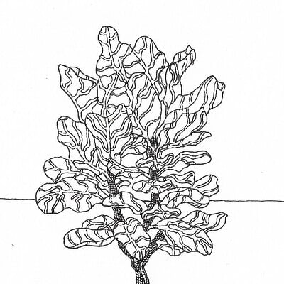 Izzi mata fiddle leaf fig