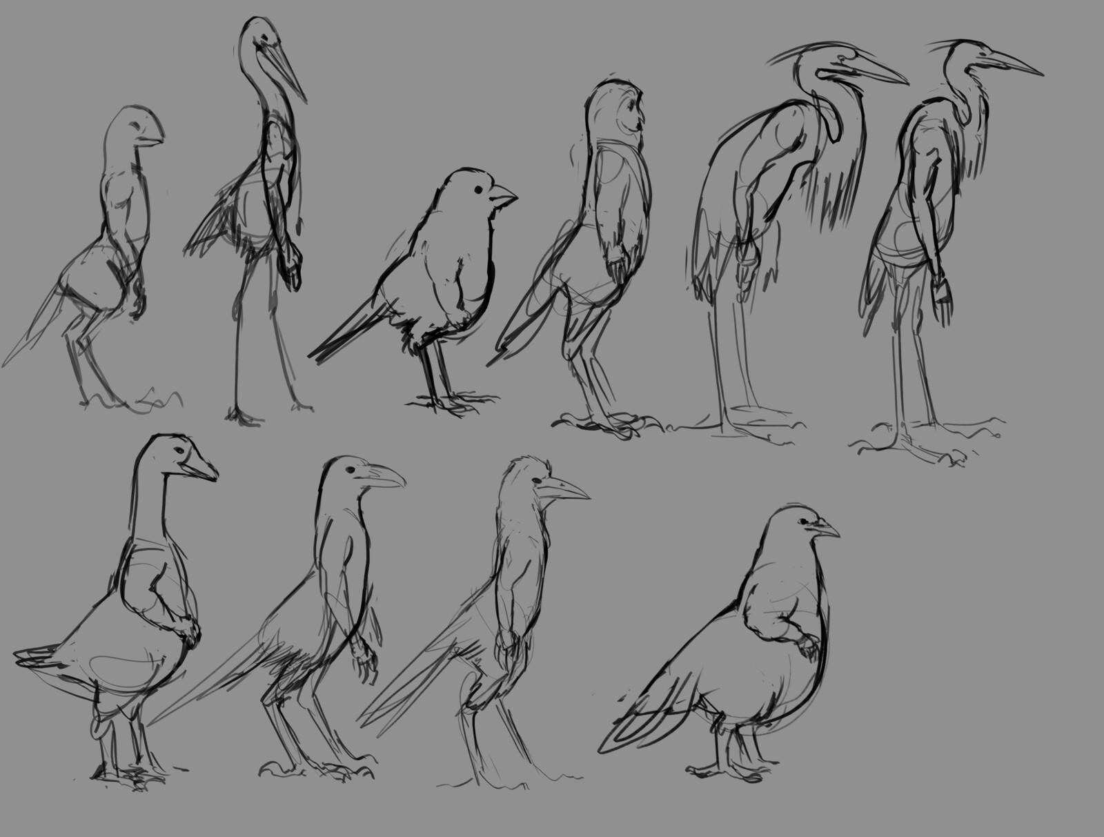 Bird concepts