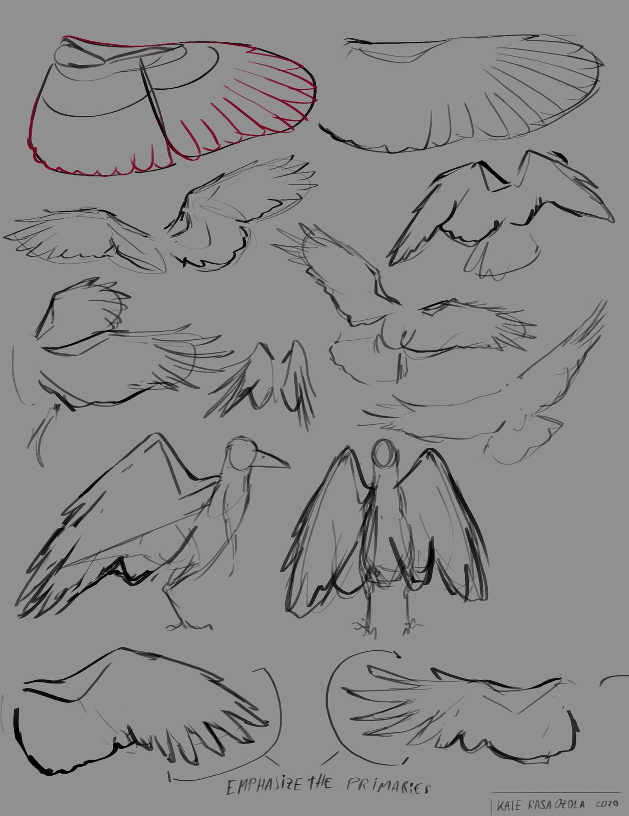 Wing studies