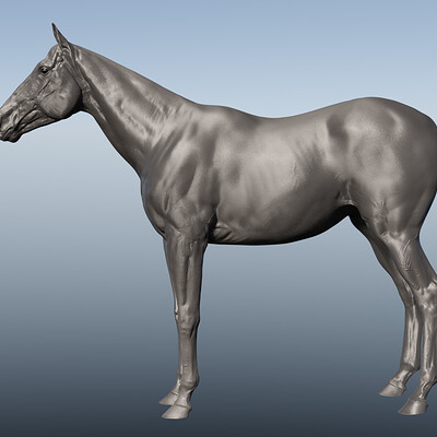 Francois rimasson horse 14
