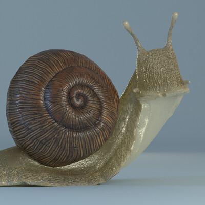 Fern kelly snail 05