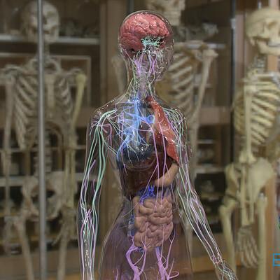 Timothy klanderud behavr organs v4 02
