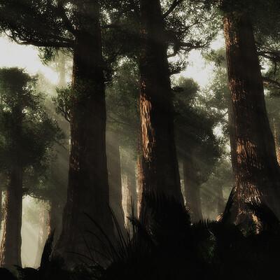 Riccardo gutta 2 foresta