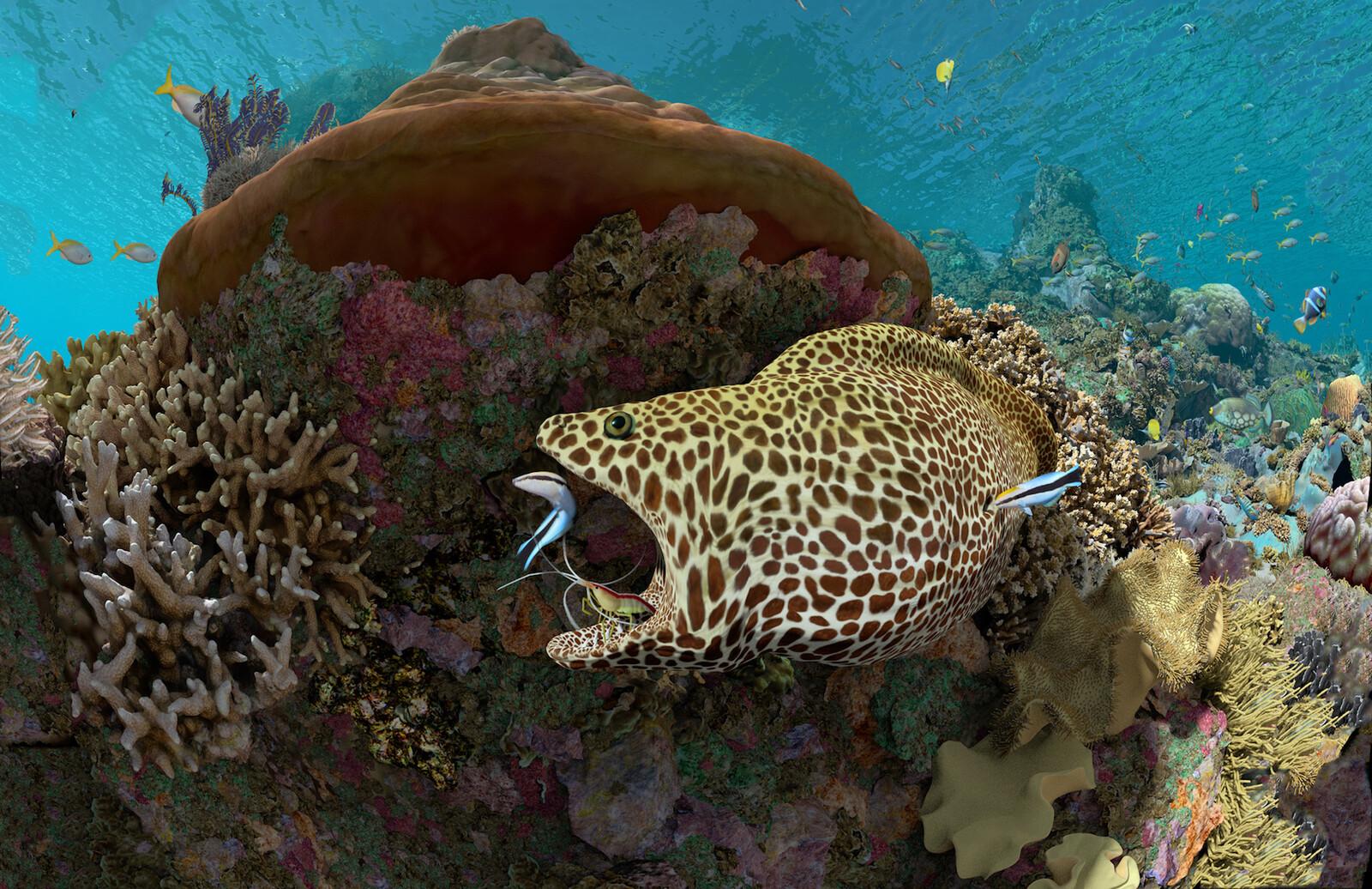 Expedition Reef: California Academy of Science: Morrison Planetarium