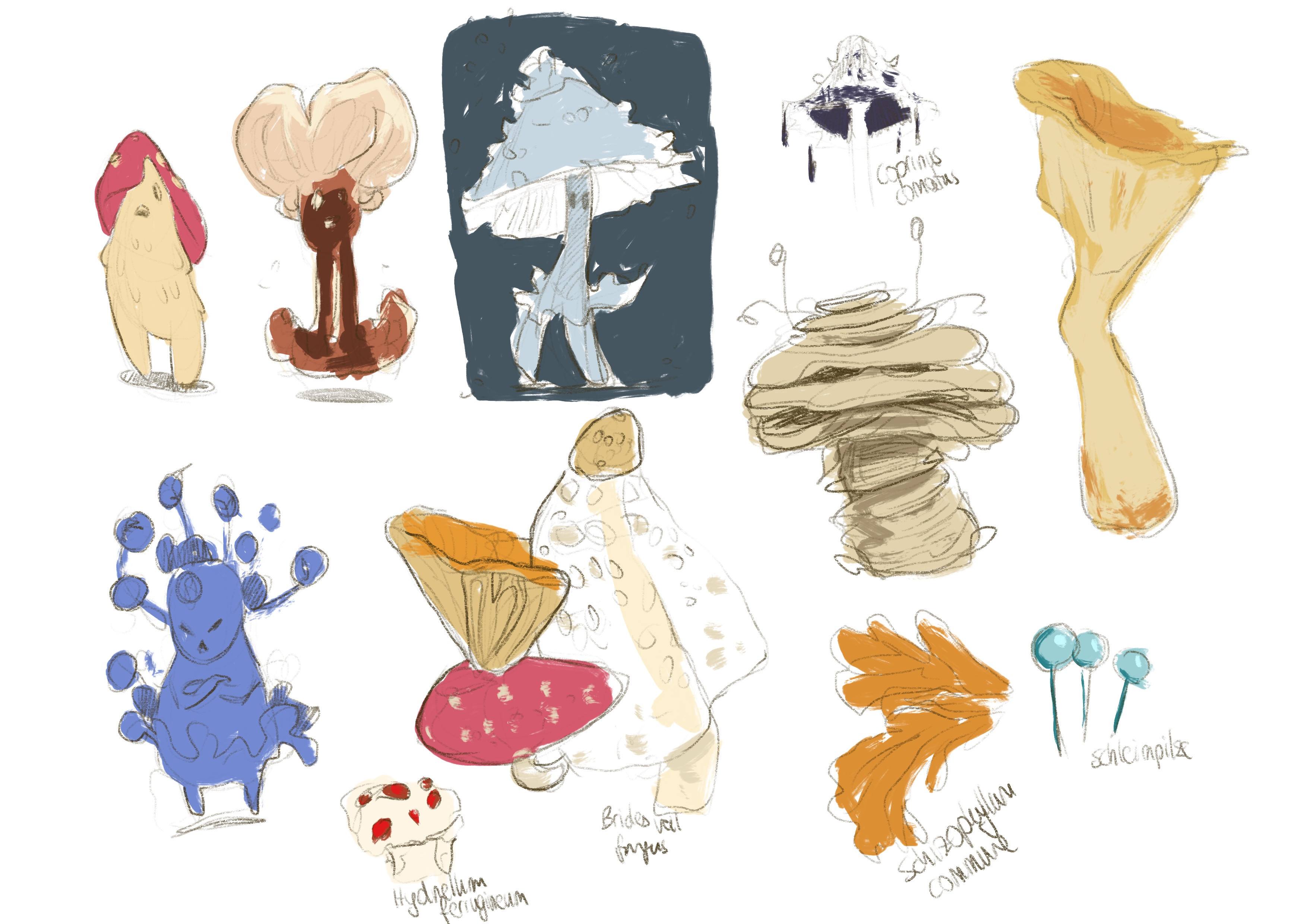 early sketches, getting to know different types of fungus.