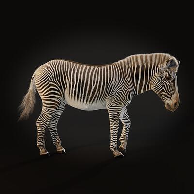 Mieke roth grevys zebra groot