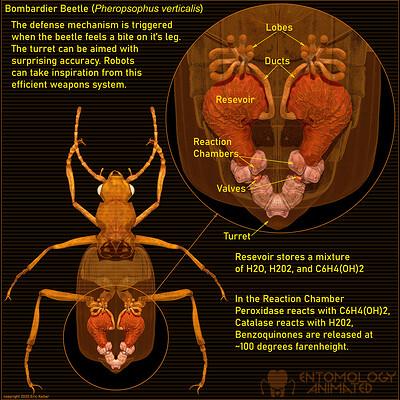 Eric keller bomabrdier beetle mechanism ig
