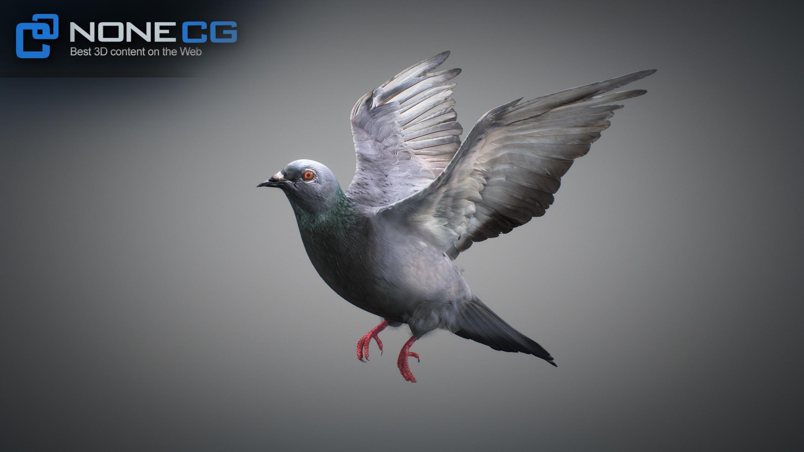 3D Rock Dove