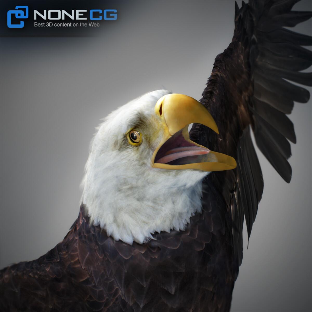 3D Bald Eagle Animated