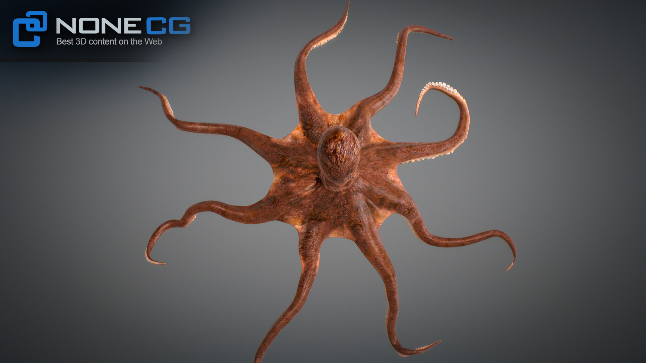 3D Octopus Animated