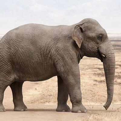 Antoine verney carron elephantasian03f01