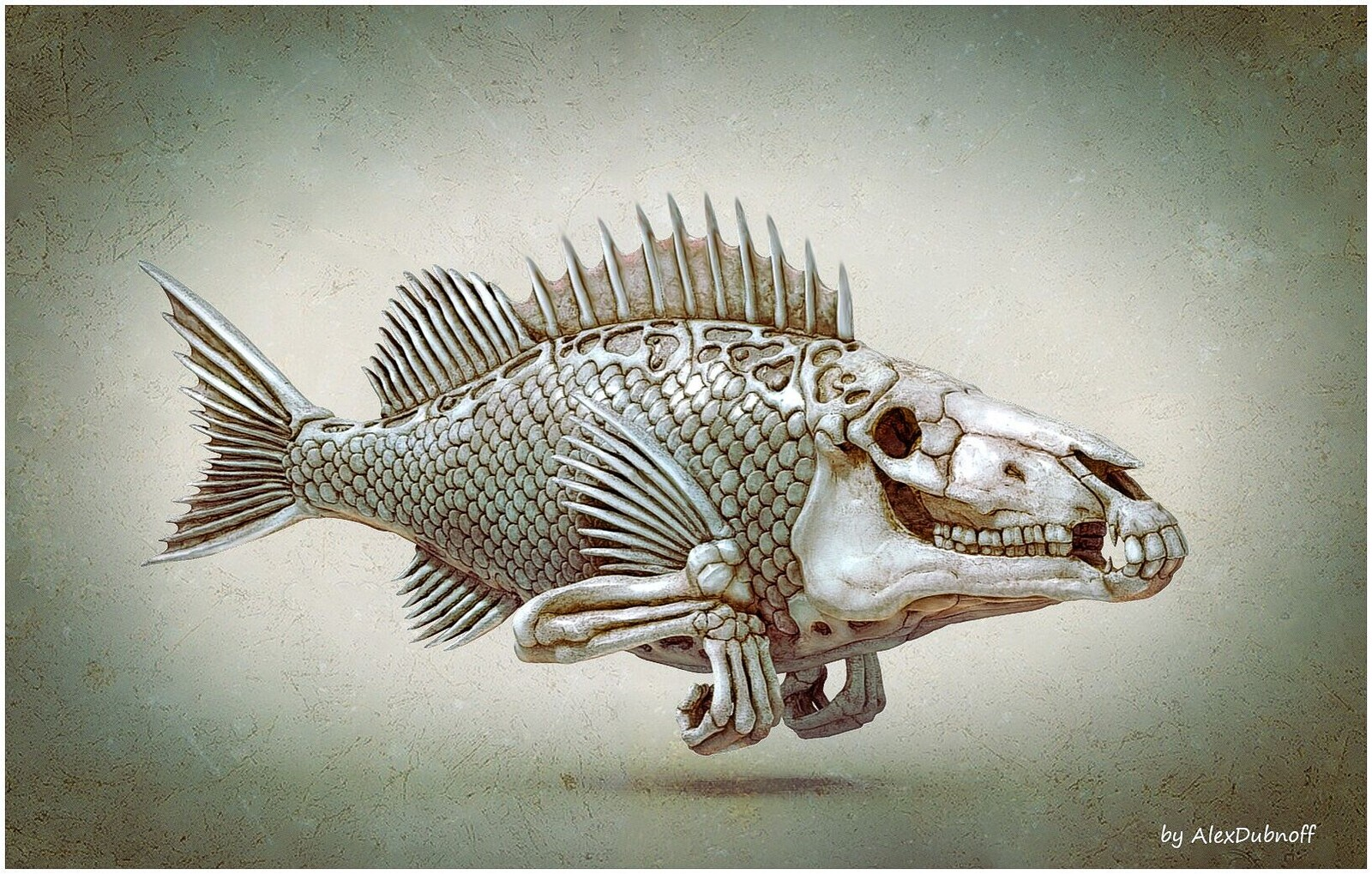 FISH head2
