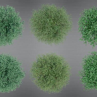 Boris van der beek treescombination