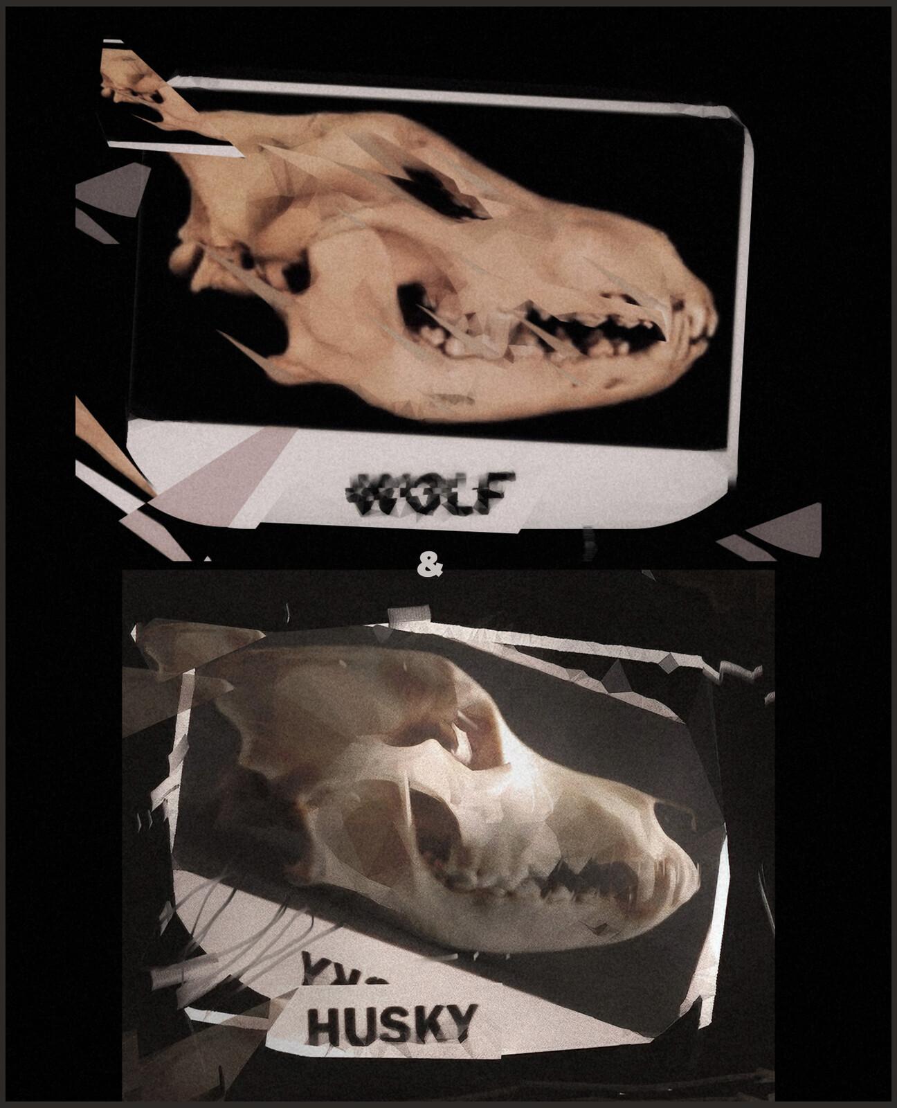 WOLF & HUSKY