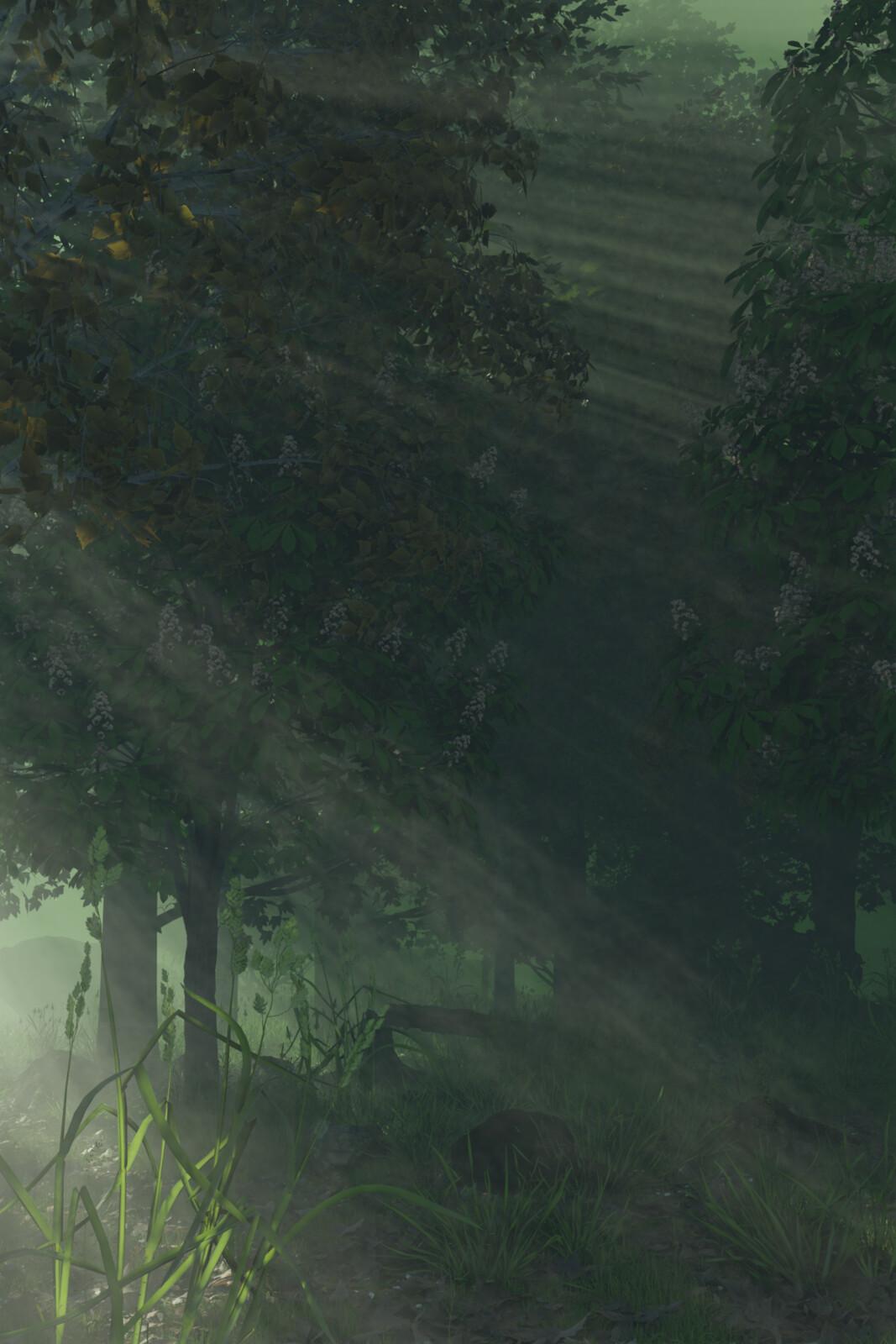Forest raw render in Blender