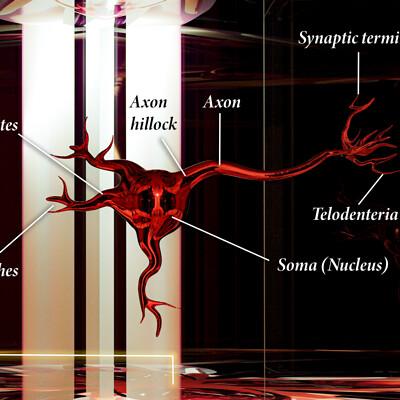 Brecht corbeel brecht corbeel blender x camera raw neuron4 3