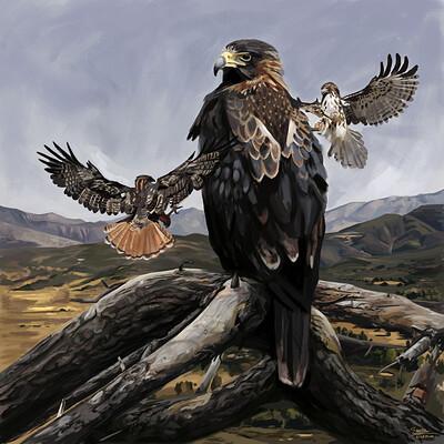 Brennan stokkermans woodwards eagle