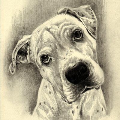 Waterlili2020 dog drawing