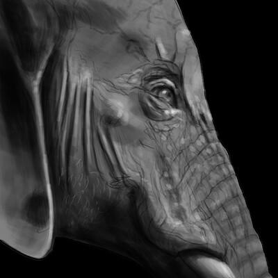 Richard huard elephant complete