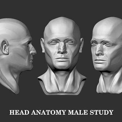 Eugenius lewidio hex finale anatomy