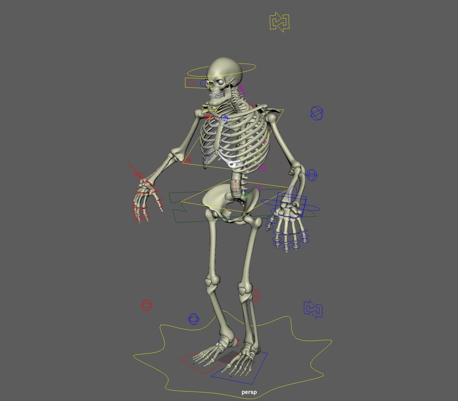 Skeleton Rig WIP