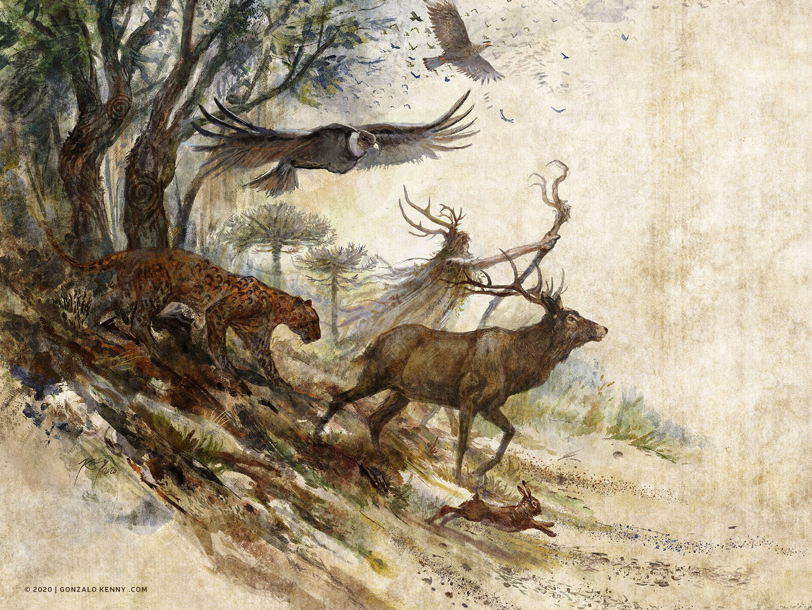 Kupuka guiando al Bosque