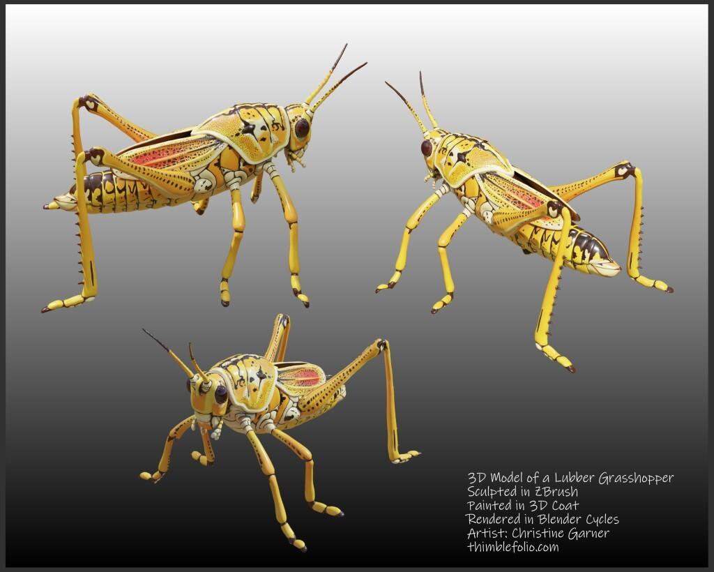 3D Model of a Lubber Grasshopper