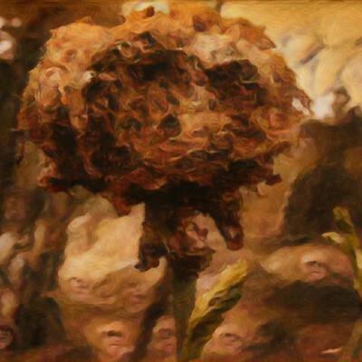 Bull 1 studio a1 48