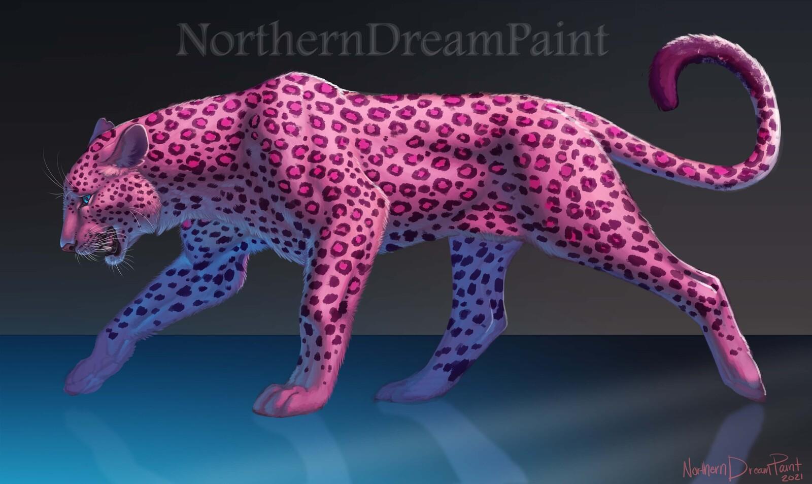 Cotton Candy Leopard Cat.