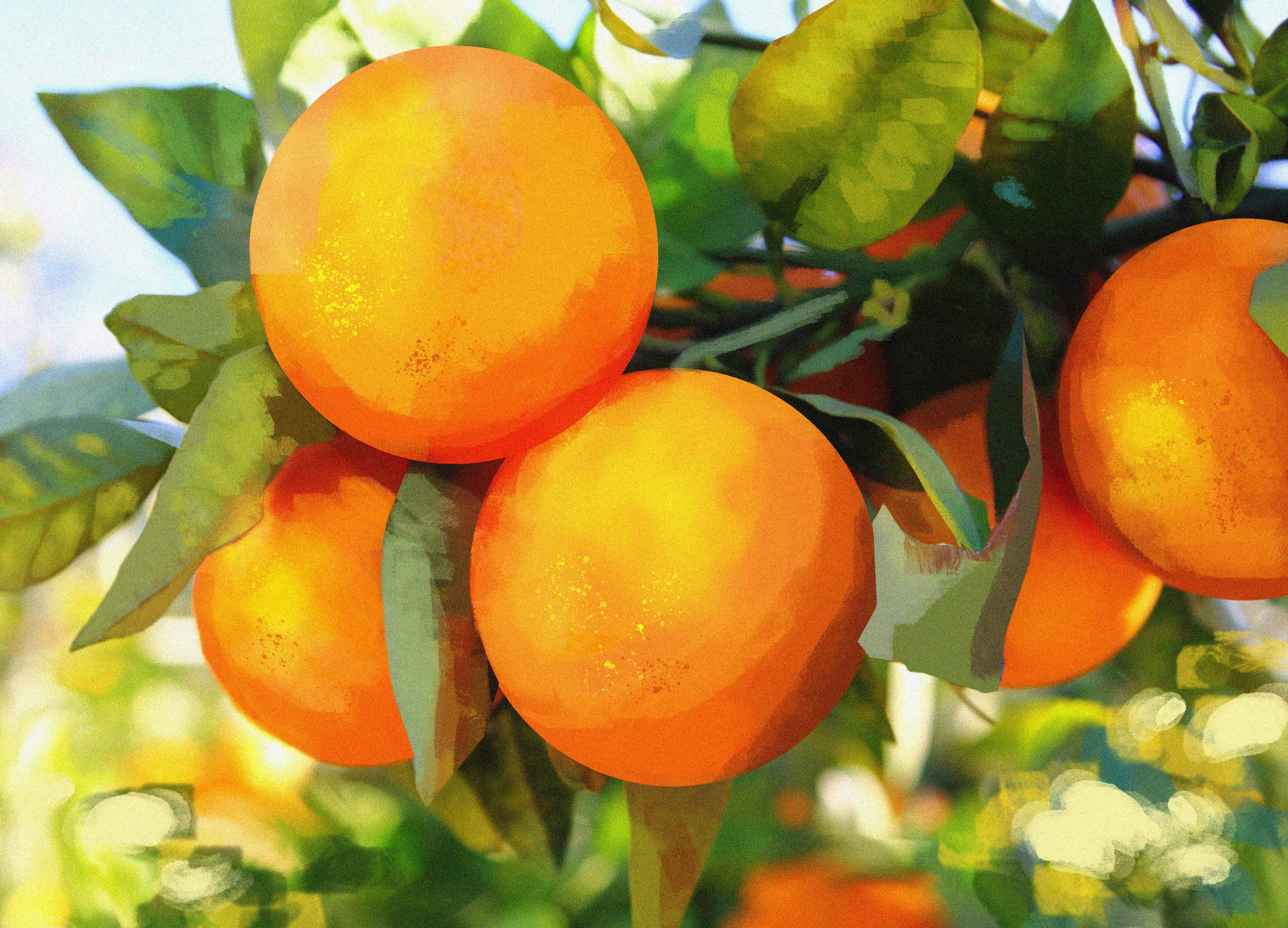 Citrus Recipe's