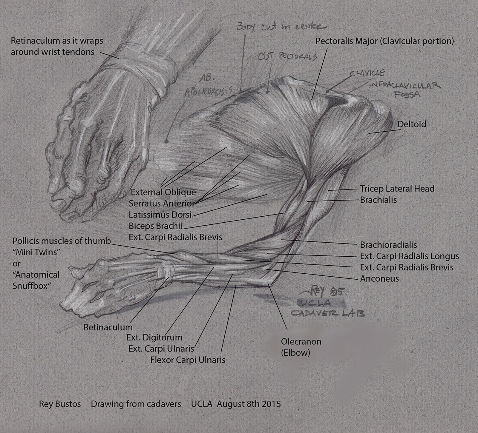 Cadaver Sketches