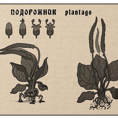Sergey strugov plantago