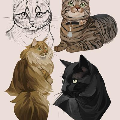 Caroline garcia cat study