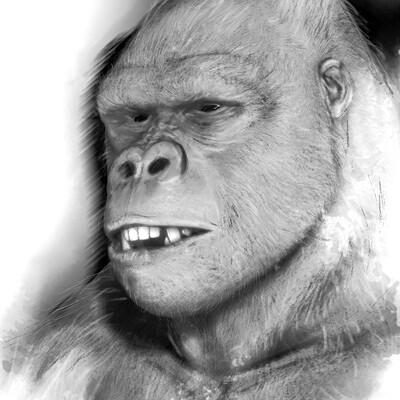 Auduge lydia gorille