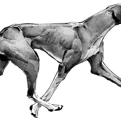 Eddie liu gray hound