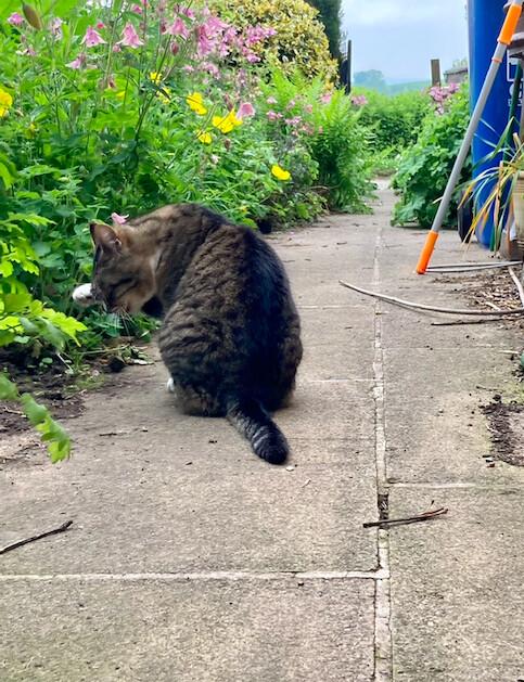 Photo reference 2 - my mums cat Oscar (Oscat)
