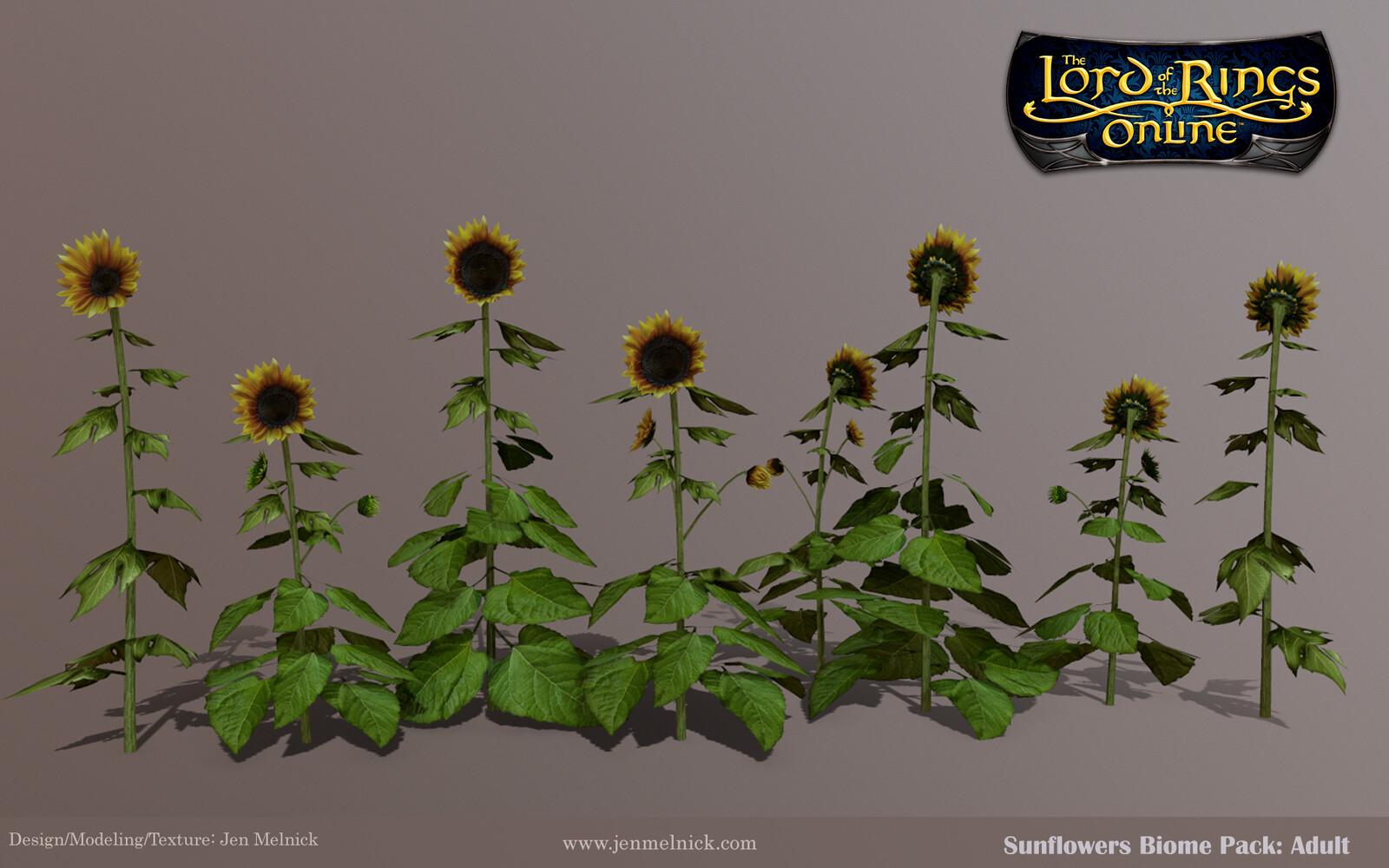 Sunflowers : Four individual Adult stalks