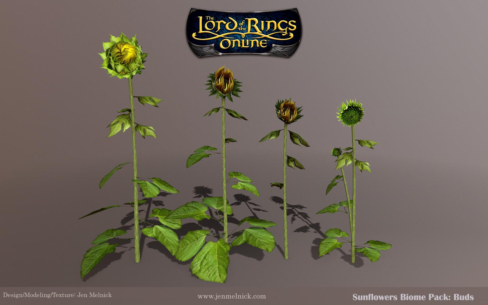 Sunflowers: Four individual bud stalks