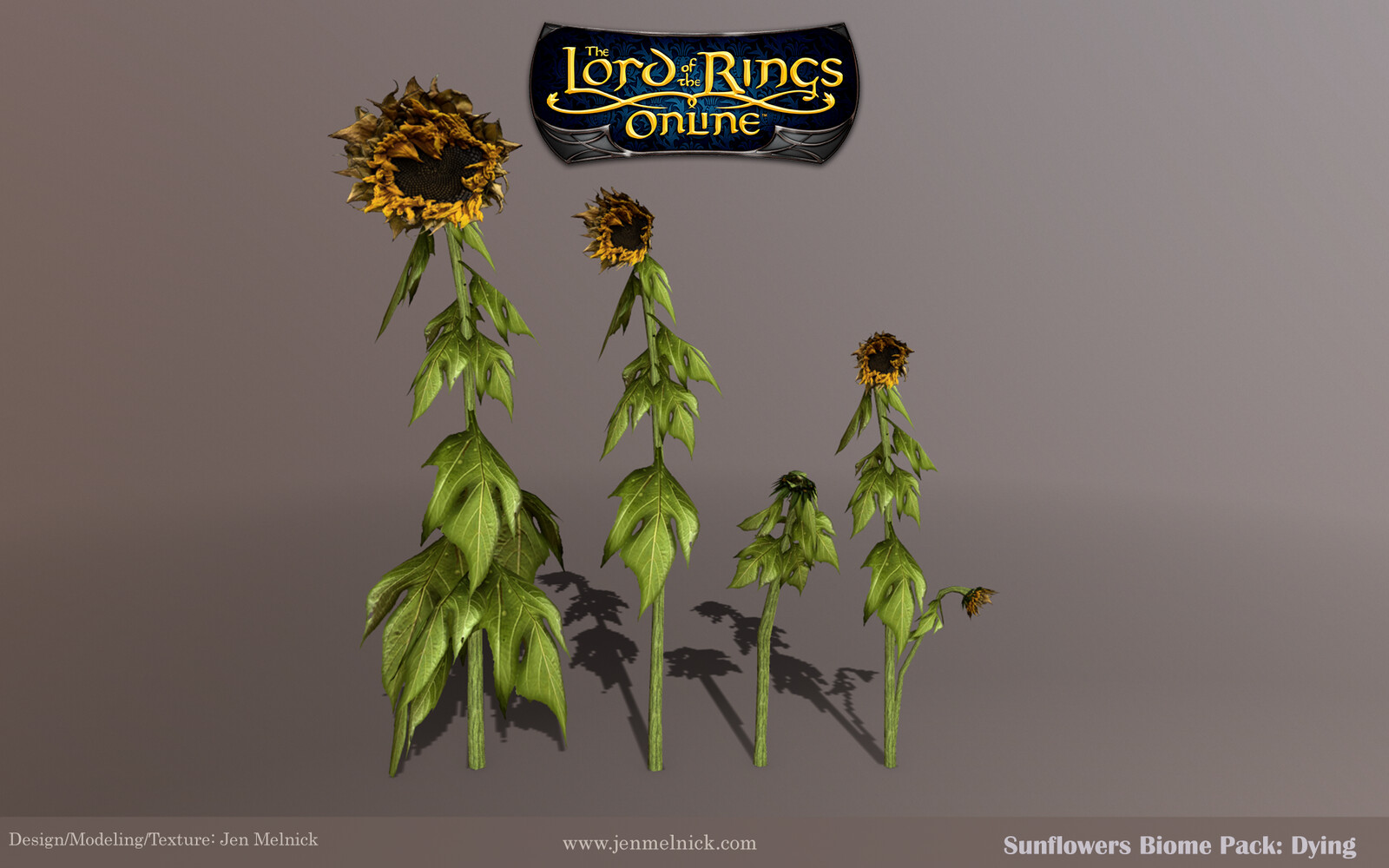 Sunflowers: Four individual dying stalks