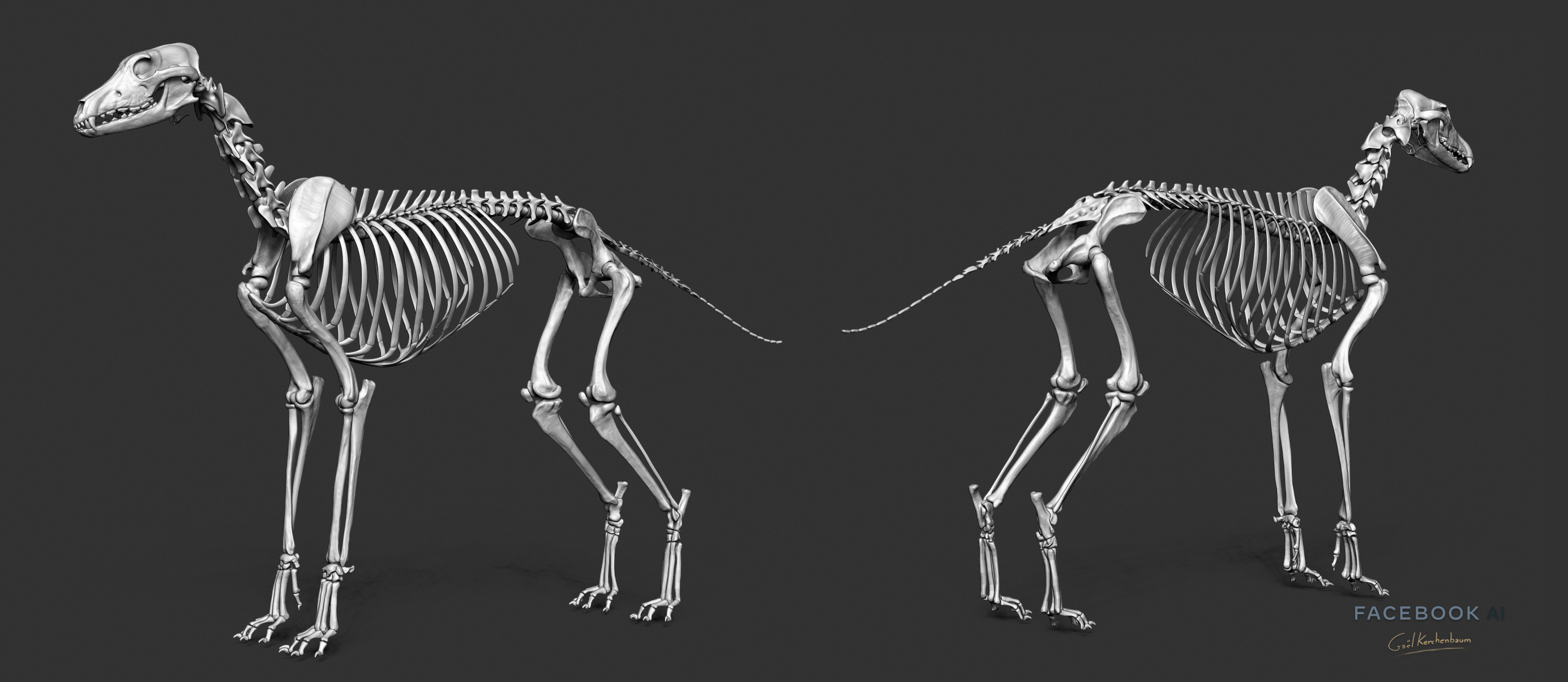 Galgo skeleton. This pass was the first to be modeled to reduce Artistic Bias