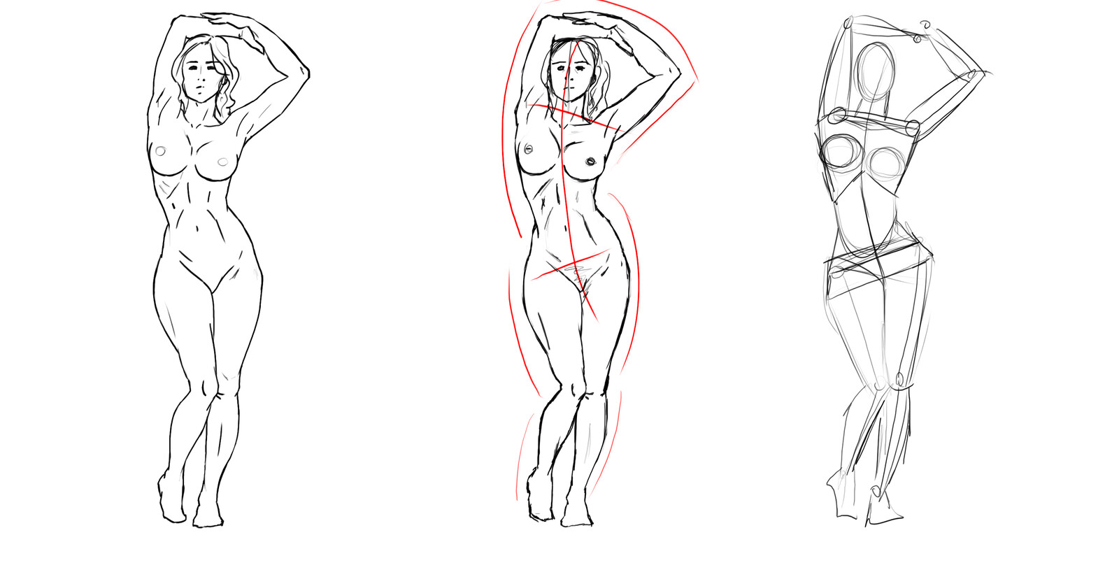 Line art Female Anatomy