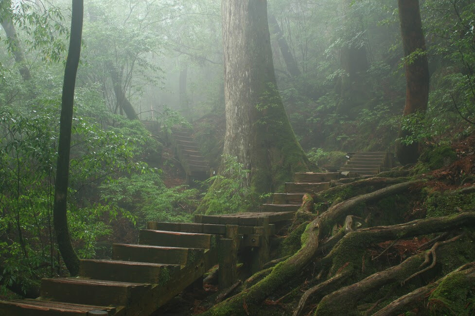 Inspiration and primary reference: Misty Forest of Yakushima. Photograph by Tristan Tuftnel   Gettyimages/iStockphoto