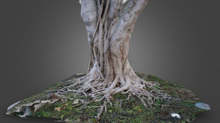 Photogramme-TREE