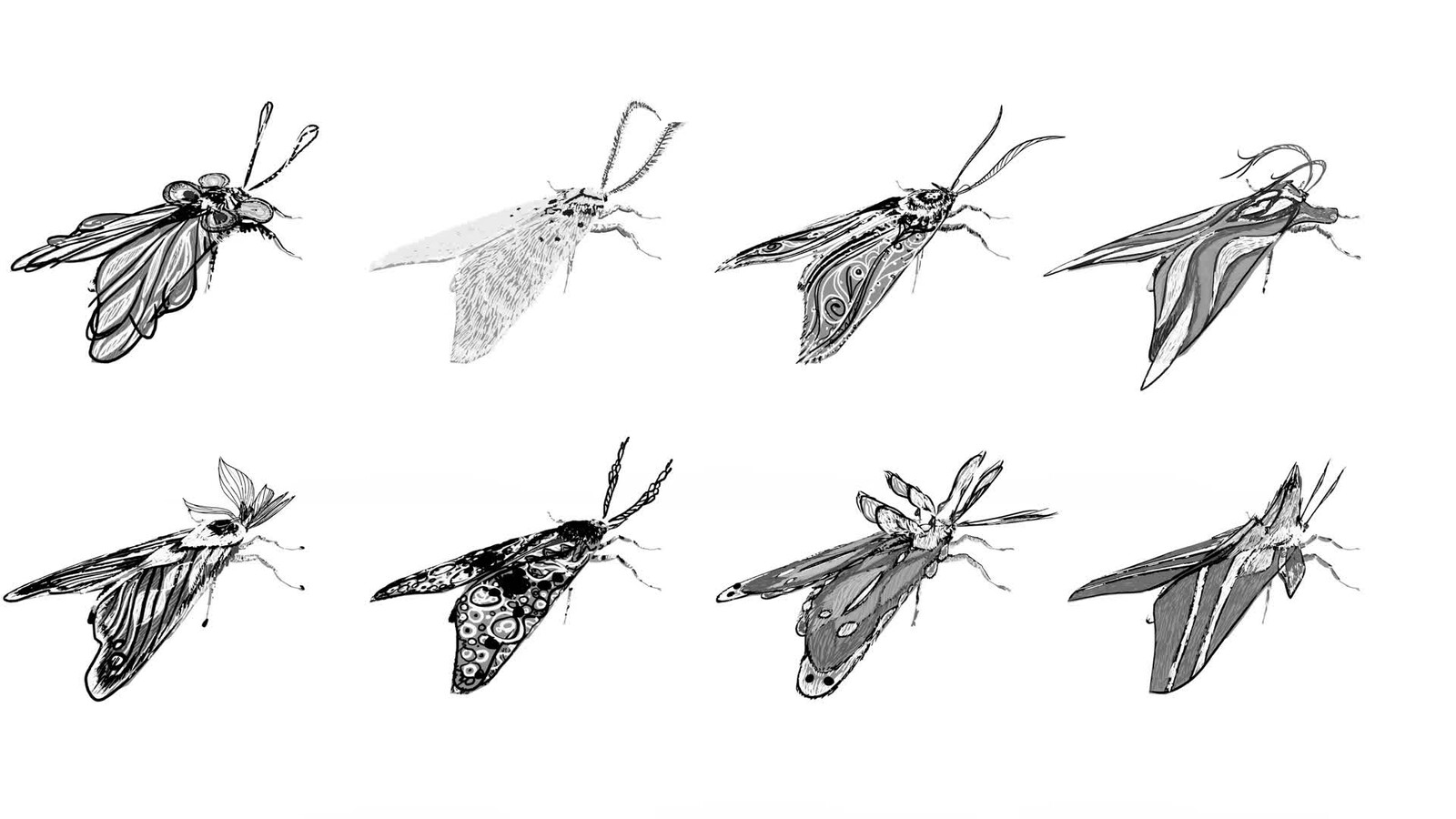 Moths Concept Art