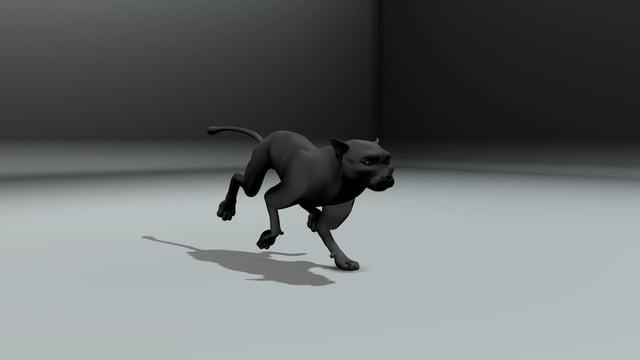 Big Cat Run
