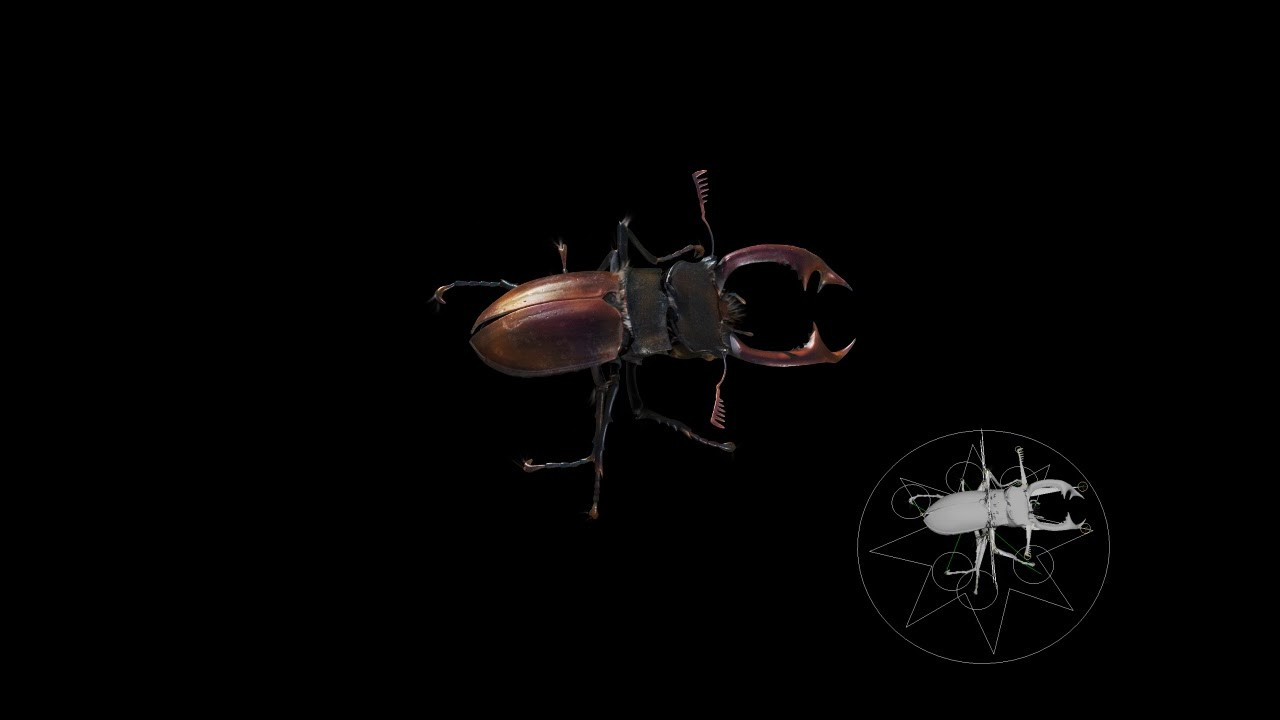 Stag Beetle Move Test