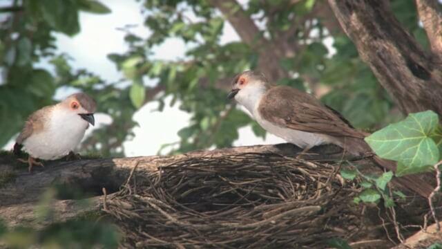 Bayut Bird
